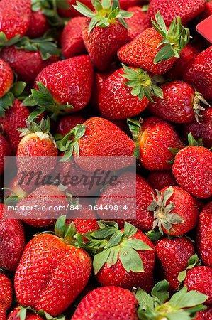 Erdbeeren zum Verkauf auf dem Markt am Sonntagmorgen, Pollenca, Tramuntana, Mallorca, Balearen, Spanien, Europa