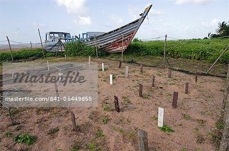 Centre de pisciculture à la recherche, chaque pieu de bois marquant un embrayage enfoui des œufs prélevés dans les nids dans des endroits vulnérables, Shell Beach, Guyane, Amérique du Sud