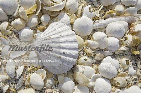 Sea shells, Hébrides, en Écosse, Royaume-Uni, Europe