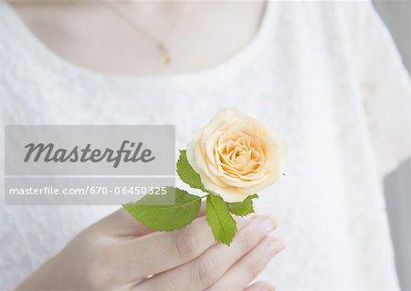 Hand holding a orange rose