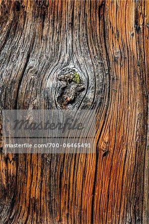Close-Up of Tree Trunk, Rock Isle Trail, Sunshine Meadows, Mount Assiniboine Provincial Park, British Columbia, Canada