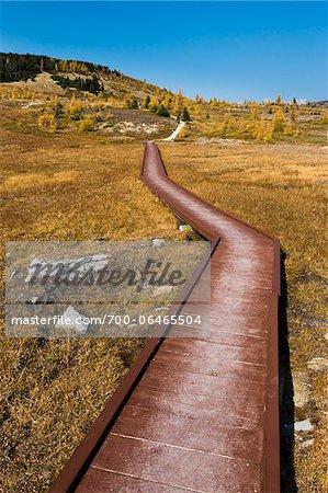 Wooden Boardwalk Rock Isle Trail Through Sunshine Meadows, Mount Assiniboine Provincial Park, British Columbia, Canada
