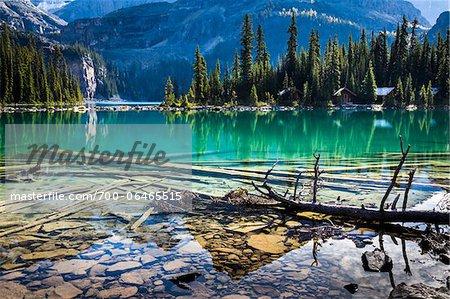 Fallen Trees and Rocky Shoreline at Lake O'Hara, Yoho National Park, British Columbia, Canada