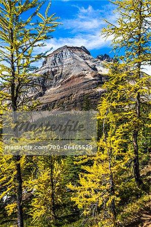 Mountain and Autumn Larch, Lake McArthur Trail, Yoho National Park, British Columbia, Canada