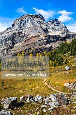 Lake McArthur Trail Through Autumn Larch and Mountainous Landscape, Yoho National Park, British Columbia, Canada