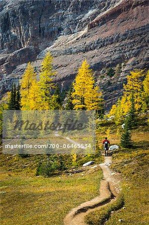 Man Hiking on Lake McArthur Trail in Autumn, Yoho National Park, British Columbia, Canada