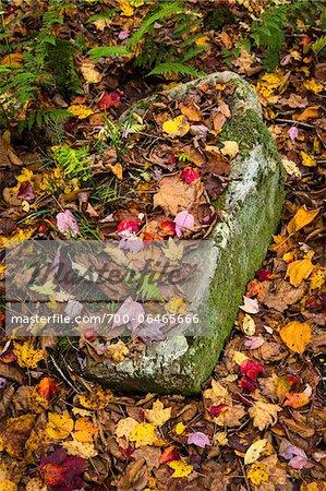 Rock Nestled Amongst Fallen Autumn Leaves on Ground
