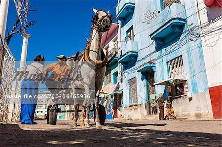 Low Angle View of Horse Drawn Cart on Callejon de Hamel, Havana, Cuba