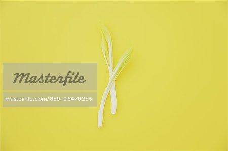 Edible wild plants on yellow background