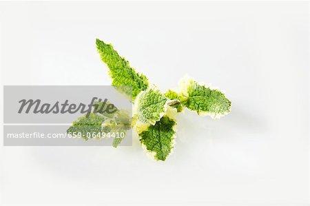 Fresh pineapple mint