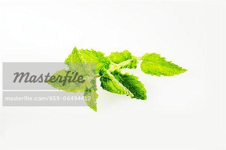 Fresh strawberry mint