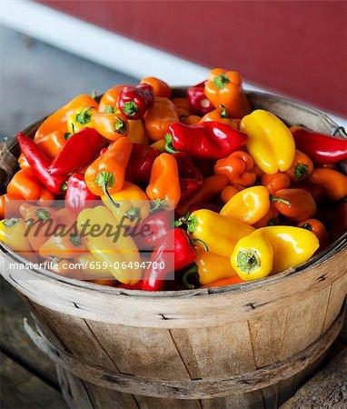 Basket of Fresh Muliti-Colored Peppers