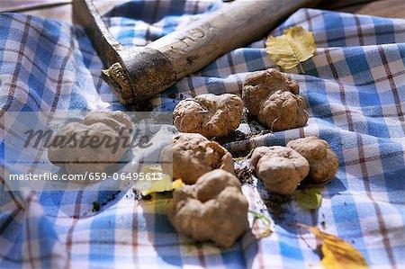 Freshly harvested truffles
