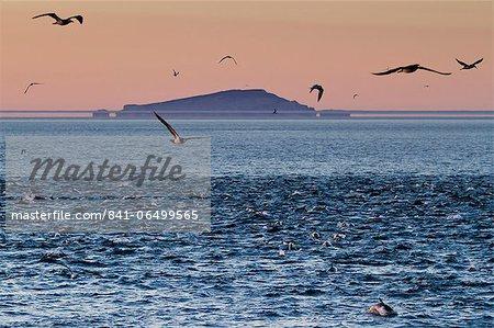 Sunrise fata morgana (mirage) with dolphins and birds, Isla San Pedro Martir, Gulf of California (Sea of Cortez), Baja California, Mexico, North America