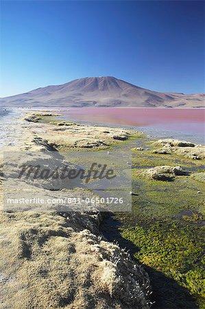 Laguna Colorada on the Altiplano, Potosi Department, Bolivia, South America