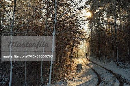 Person Walking on Country Road Through Forest in Winter, near Villingen-Schwenningen, Baden-Wuerttemberg, Germany