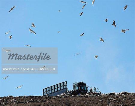 Birds flying over landfill