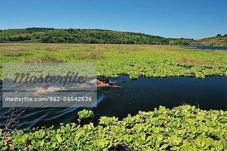 Boys swimming in lake Lagune, Nicaragua, Central America