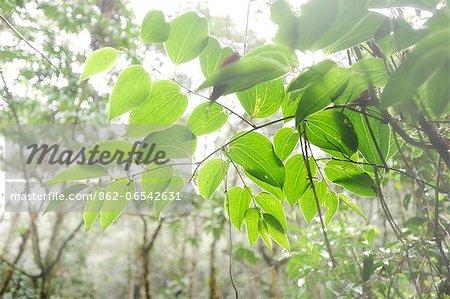 Overhanging branch in Parque Nacional de Amistad in Panama, Central America