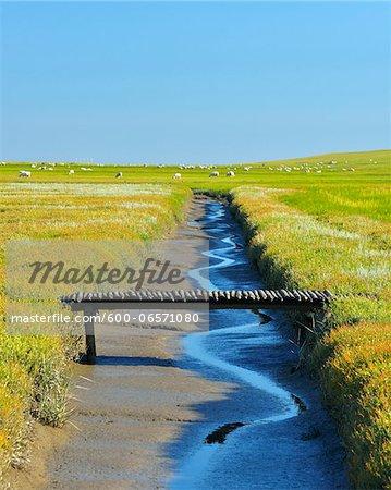 Tide Way with Bridge, Westerheversand, Summer, Westerhever,  Tating, Schleswig-Holstein, Germany