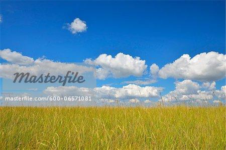Meadow in the Summer, Westerhever, Tating, Schleswig-Holstein, Germany