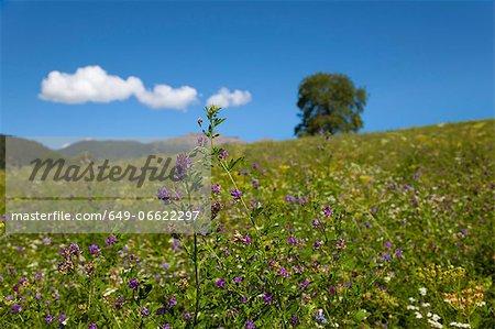 Close up of purple flower in rural field
