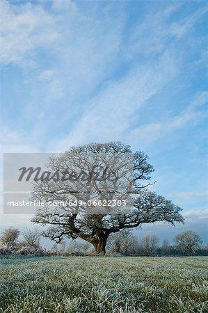 Tree growing in rural field