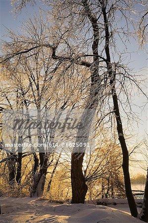 Tree growing in snowy landscape