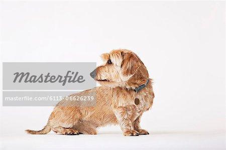 Dog looking over its shoulder