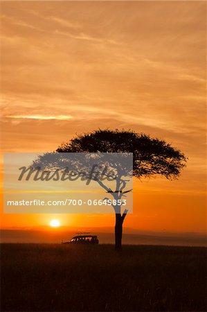 View of acacia tree and safari jeep silhouetted against beautiful sunrise sky, Maasai Mara National Reserve, Kenya, Africa.