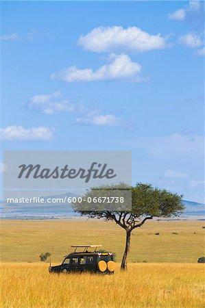 Acacia tree and safari jeep in the Maasai Mara National Reserve, Kenya