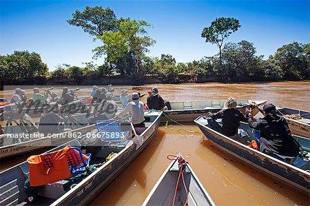 South America, Brazil, Mato Grosso, Pantanal, ranks of wildlife photographers photographing a jaguar in the Parque Estadual Encontro das Aguas