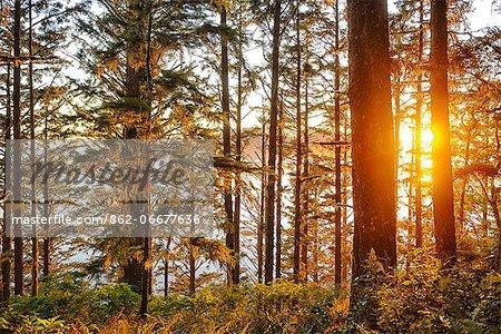 Forest at Cape Alava, Olympic National Park, Clallam County, Washington, USA