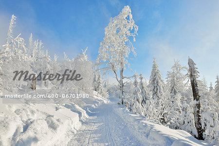 Snowy Path in Winter Forest, Grafenau, Lusen, National Park Bavarian Forest, Bavaria, Germany