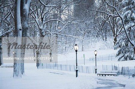 Trees in snowy urban park