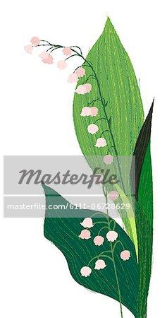 Flowering Plant On White Background