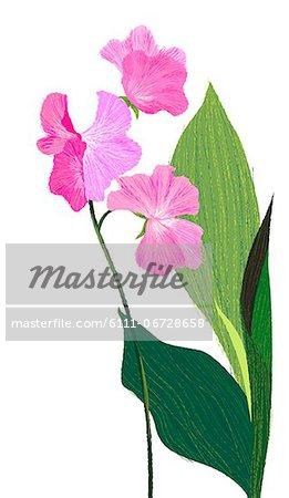Flower Plant On White Background