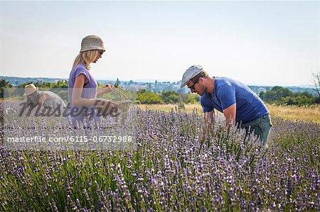 Three People In Lavender Field, Croatia, Dalmatia, Europe