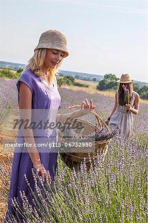 Two Women Picking Lavender, Croatia, Dalmatia, Europe