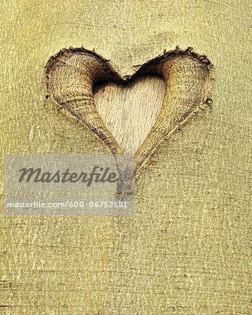 Heart Carved into Beech Tree Trunk, Hallerbos, Halle, Flemish Brabant, Vlaams Gewest, Belgium