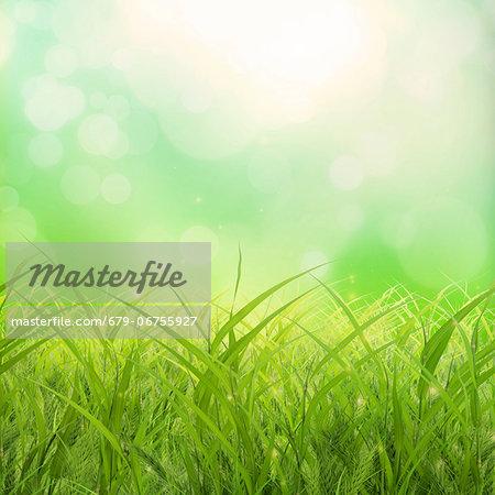 Grass, computer artwork.