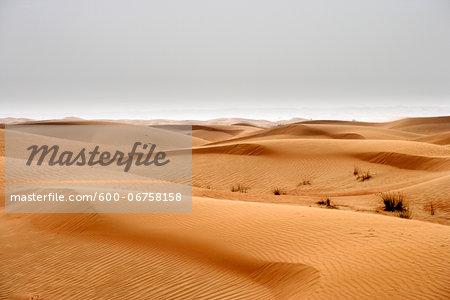 Sand Dune, Dubai, United Arab Emirates