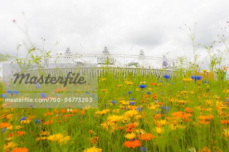 flowers in bloom around the 2012 summer olympic stadium, stratford, london, UK
