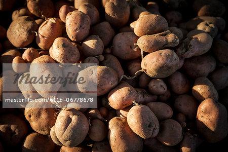 Fresh Potatoes, Croatia, Slavonia, Europe