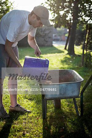 Man Pouring Potatoes In Wheelbarrow, Croatia, Slavonia, Europe