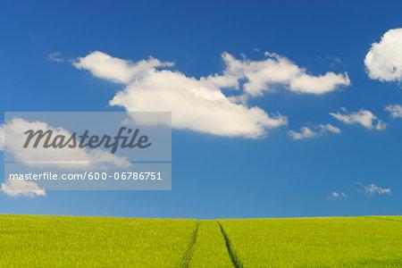 Grain field and Cloudy sky, Springtime, Hesse, Germany