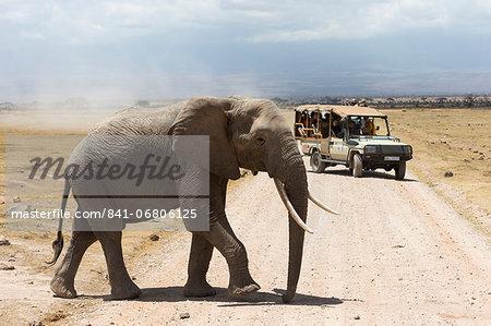 African elephant (Loxodonta africana) and tourists, Amboseli National Park, Kenya, East Africa, Africa