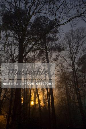 Glowing foggy trees at night, Macon, Georgia, USA