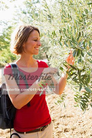 Woman touching olive tree
