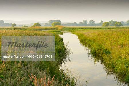 Wetland in morning light, Hesse, Germany, Europe